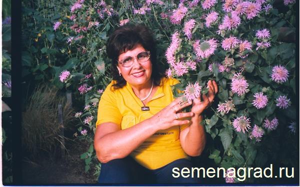 Монарда дудчатая многолетние цветы